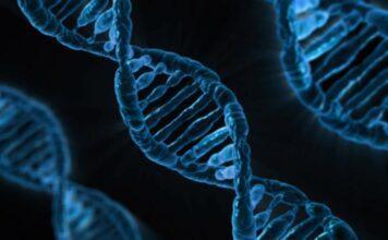DNA क्या होता है?